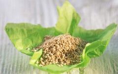 La quinoa es un cereal muy saludable. Foto: gtres