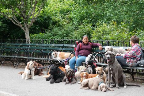 Cuidadores de perros Flickr Hector Sanchez