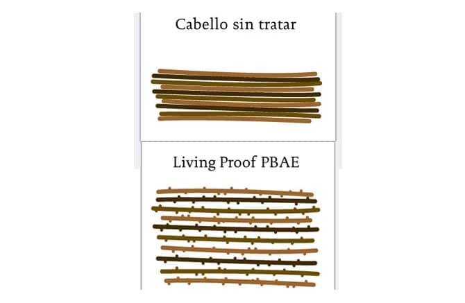 Foto: wel Living proof España
