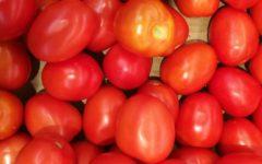 calorias del tomate