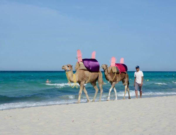 Experiencias en Túnez