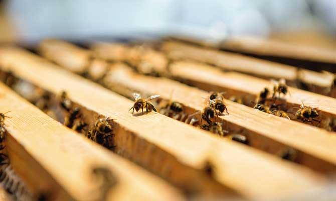 dia mundial de la abeja 2020