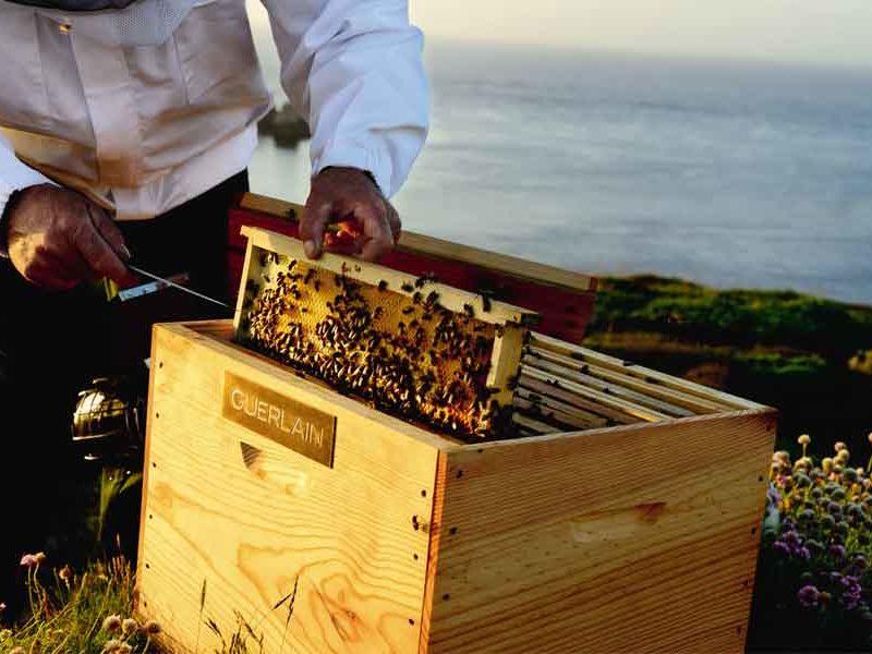 por qué las abejas son tan importantes