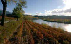ruta vino de la rioja alavesa