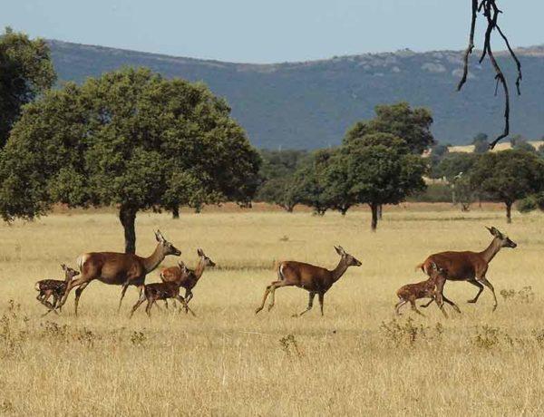 ciervos en la naturaleza de Entreparques
